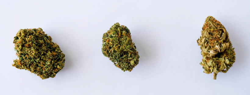 Best Sativa Strains To Buy