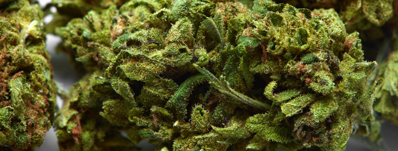 When Should You Use Indica Strains?