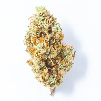 Gelato Dream Sativa-Dominant Hybrid AAAA Bud