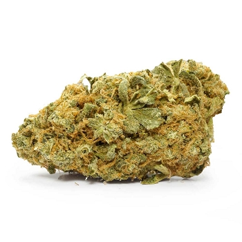 Golden Cobra Sativa-Dominant Hybrid AAA+ Bud