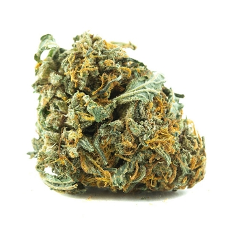 Power Plant Sativa-Dominant Hybrid AAA Bud