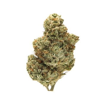 Queen of Hearts Sativa-Dominant Hybrid AAA Bud