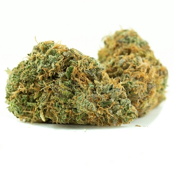Red Congolese Sativa AAA Bud