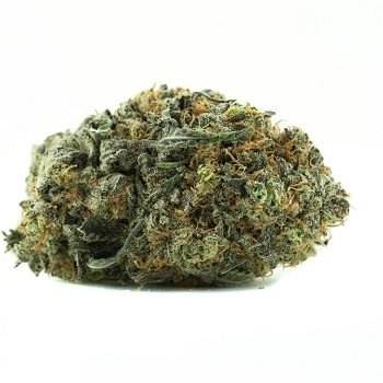 Strawberry Cough Sativa-Dominant Hybrid AAA Bud